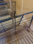 """2 - 71"""" gates  GATES WALL TO FEEDER - 23 each and  ' 6' GATES - FEEDER TO FRONT GATE  - 15 each"""