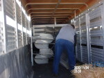 Loading Feeders and waters out to Fruita Co