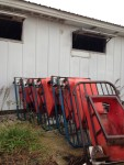 6 red sow feeders with head gates