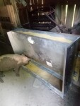 Picture of happy pigs in Riverton WV eating out of a feeder instead of rubber pans