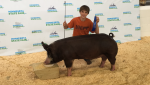 2015 Reserve Champion Minnesota State Fair